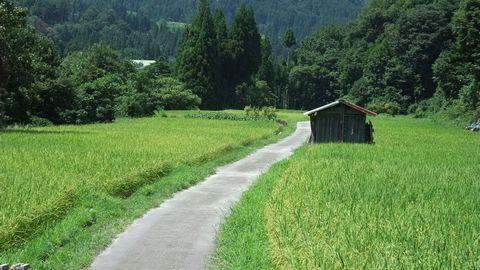 sirakawagou43.jpg
